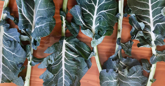 Rescued broccoli leaf.  Photo by Full Harvest