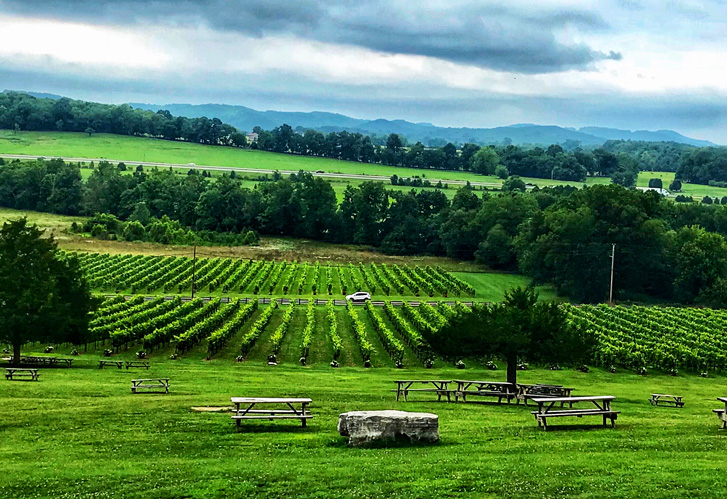 Lawn and Picnic Area at Arrington Vineyards